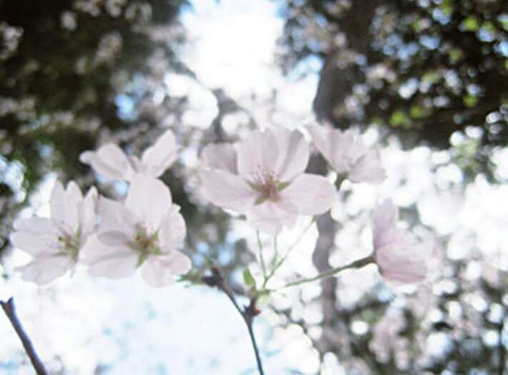 春が好きな人
