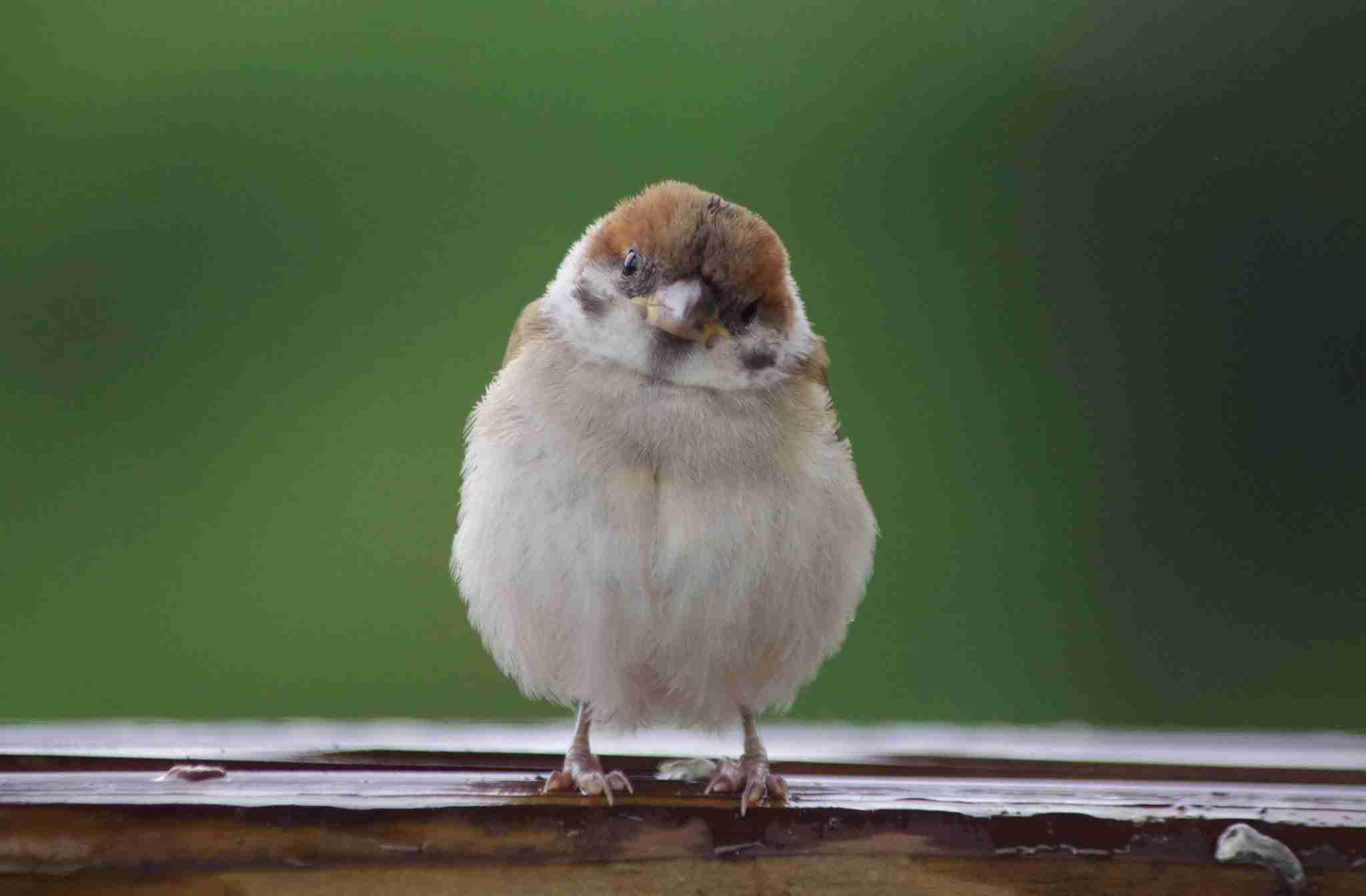 鳥の画像を貼るトピ