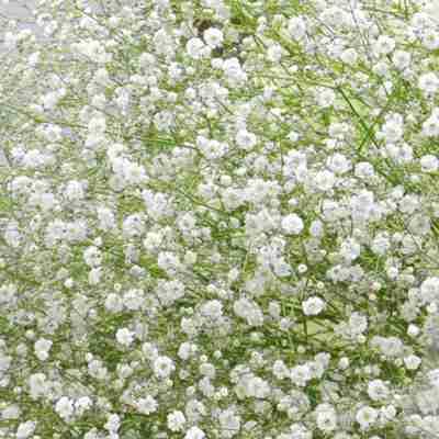 好きな花と花言葉