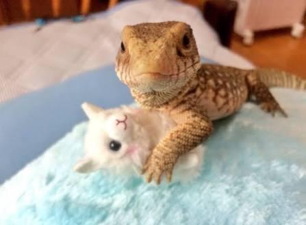 【閲覧注意!】爬虫類好き集まれ!