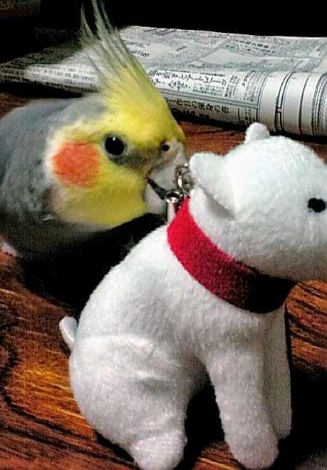 ペットのおもちゃを教えて&見せてください\(^o^)/