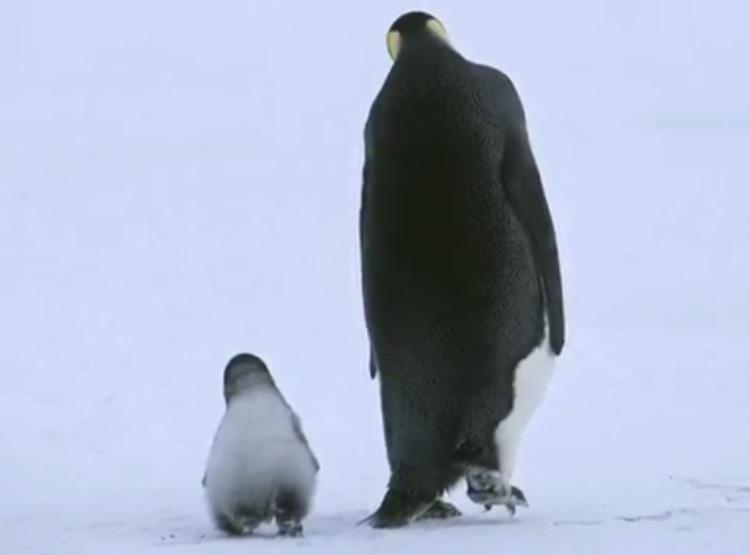動物の後ろ姿見せて下さい
