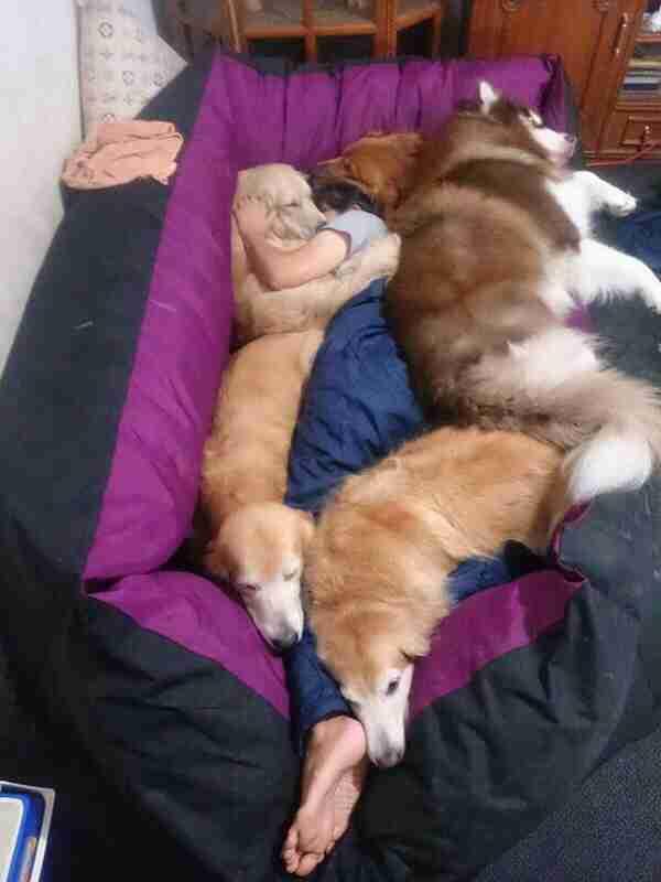 ペットと同じ布団で寝てる人