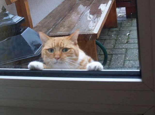 こいつに決めた!保護施設にいた猫氏、ロックオンした人物に猛アピール。その結果家族として迎え入れられる
