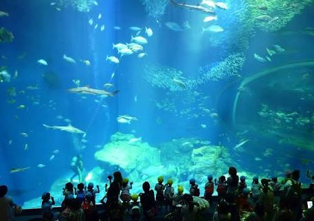 好きな動物園、水族館は?