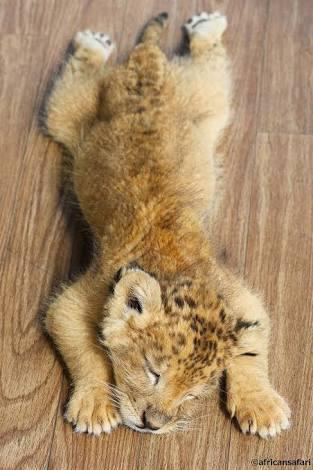 西武ライオンズ好きな方いますか?