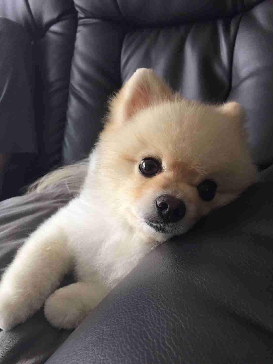 ペットの可愛いところを語るトピ
