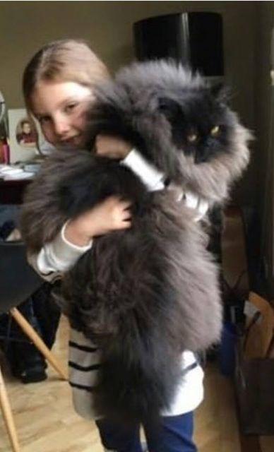 猫と犬の画像を交互に貼っていくトピ