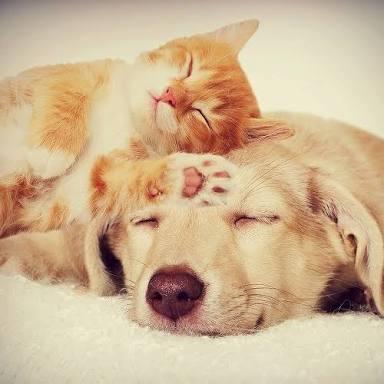 【画像】猫の寝顔【癒し】