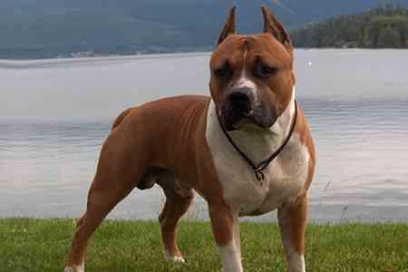 ペットの犬が飼い主親子を殺害か、自宅に遺体…ドイツ