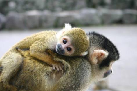 いろんな動物の赤ちゃん子供が見たい‼