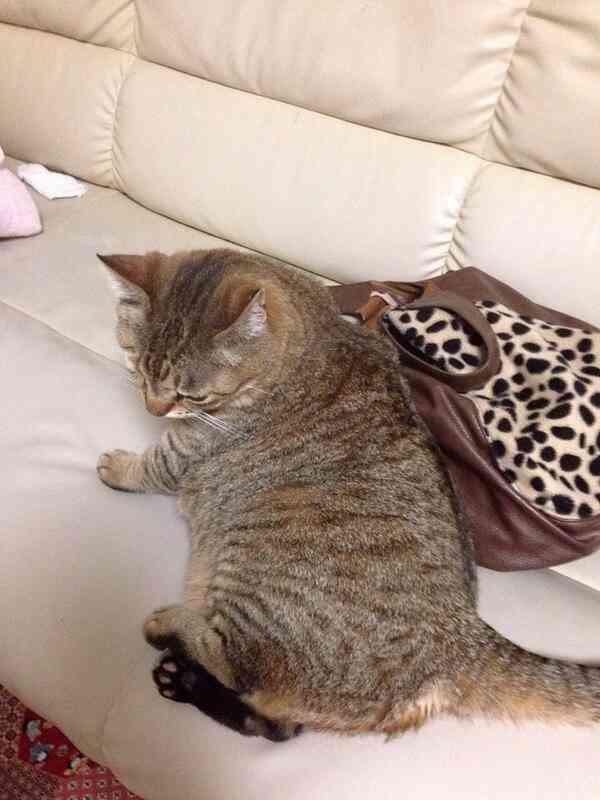 猫、拾った事ある人!