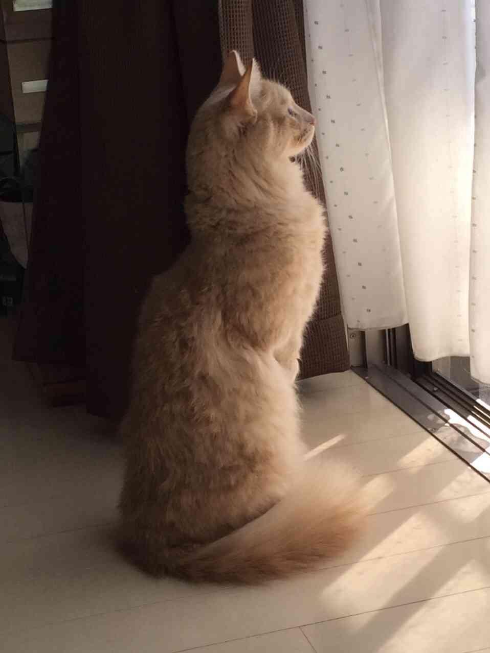 【画像】猫の色んなパーツが見たい