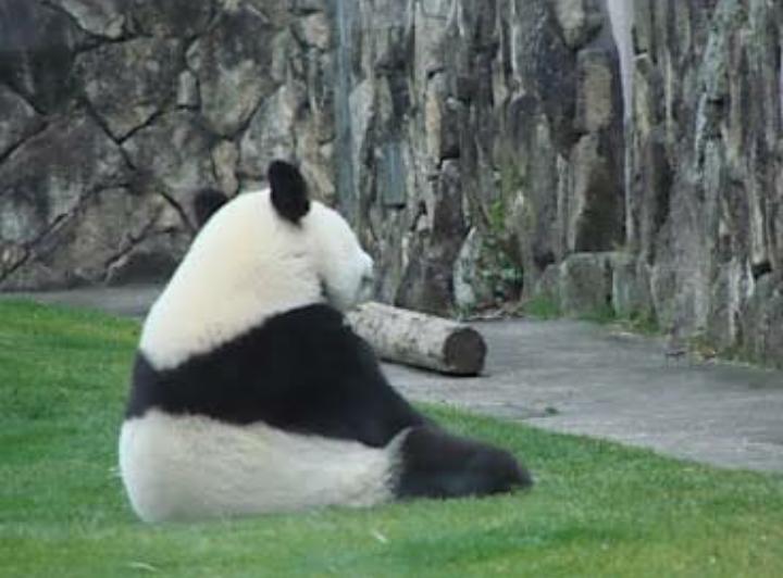 パンダの背中にセリフをつけるトピ