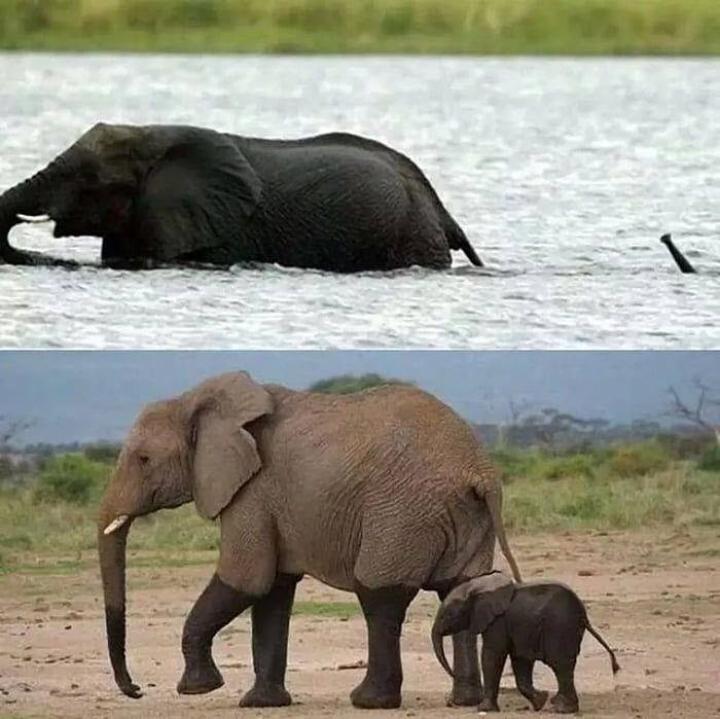 動物の一部分だけが写っている画像を貼るトピ