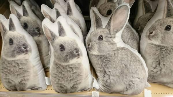 【雑談】ウサギを交えながら、夜更かしするトピ