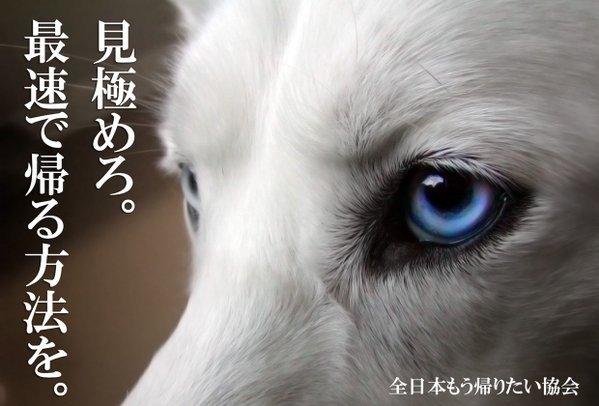 【画像】イケメン動物【収集】