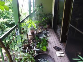 「植物男子ベランダー」を語りたい