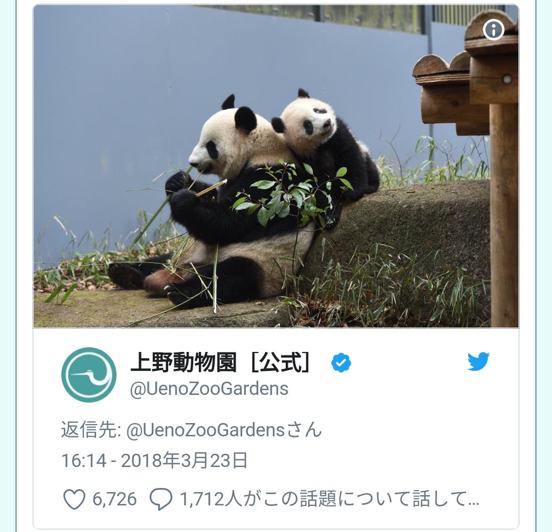 ピンクのお花キレイだねー 上野動物園がジャイアントパンダ・シャンシャンの近況とGWの観覧方法を発表