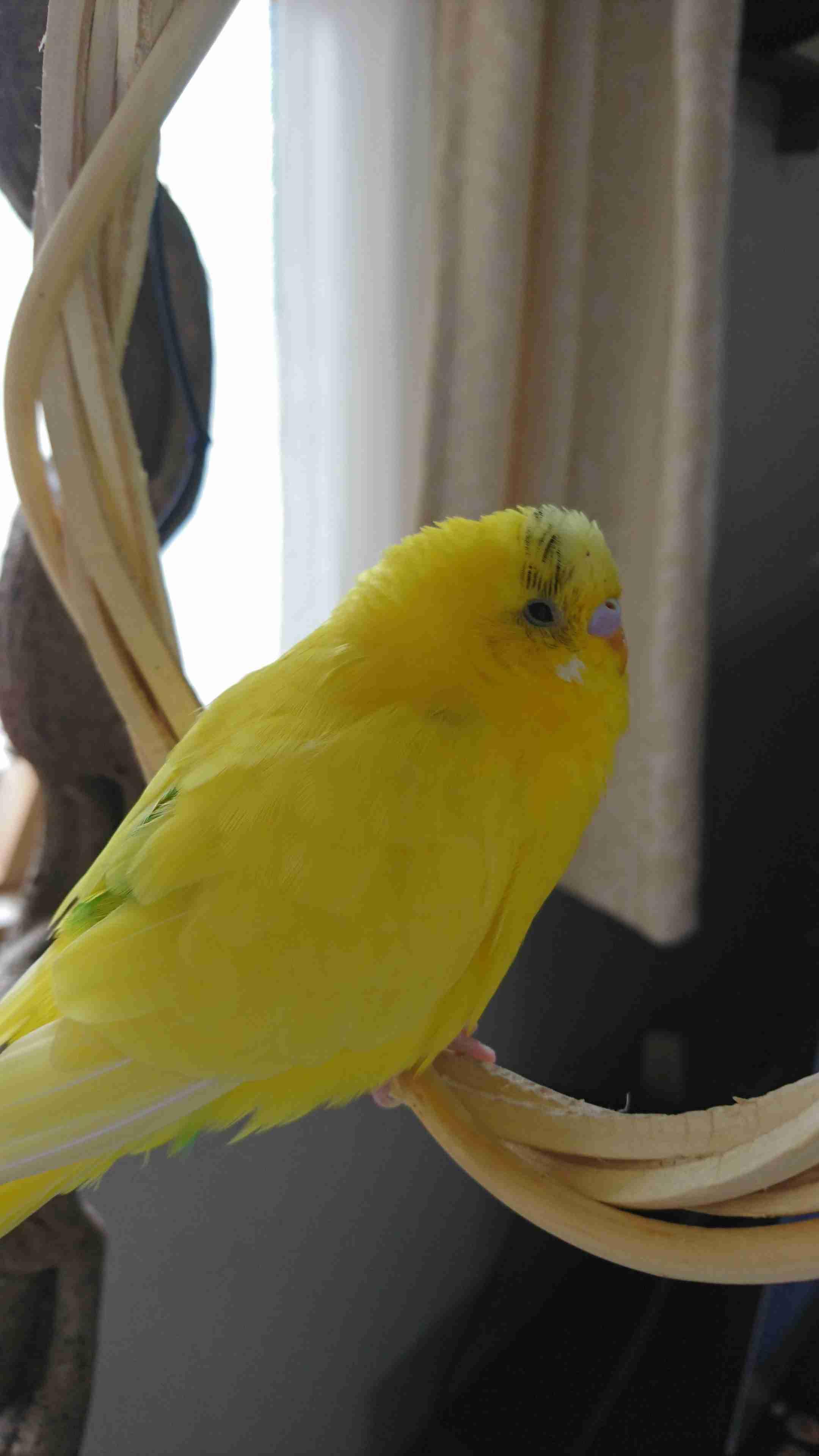黄色い画像を貼るトピ