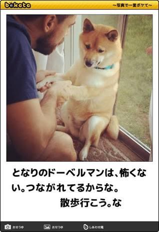 愛犬が可愛くてたまらない!どんな仕草が愛おしくて仕方ないですか?