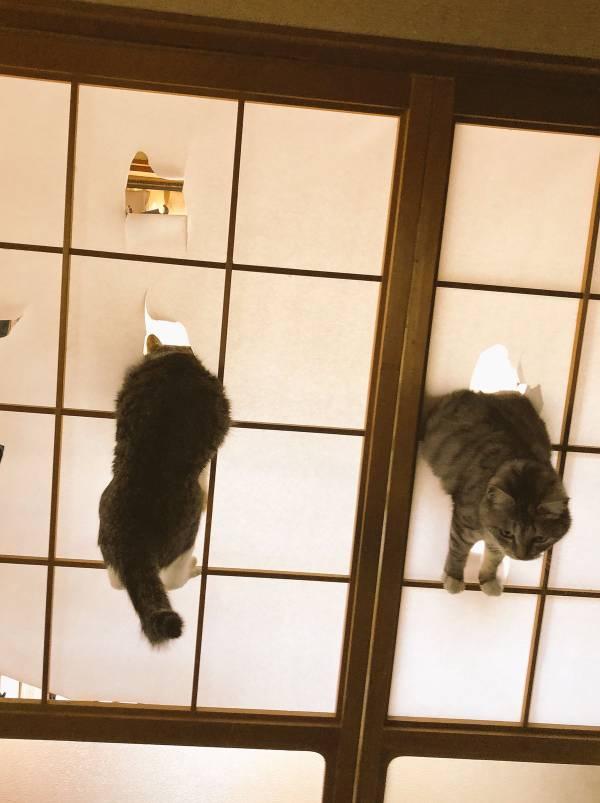 ガルちゃん猫カフェ27号店 開店しました♪ (初めての方も大歓迎!)