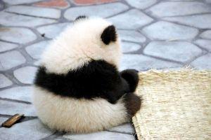 動物の可愛い画像を貼って和むトピ♪* ・.