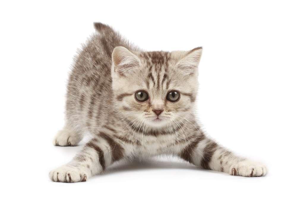 我が家の猫に聞いてみたいこと