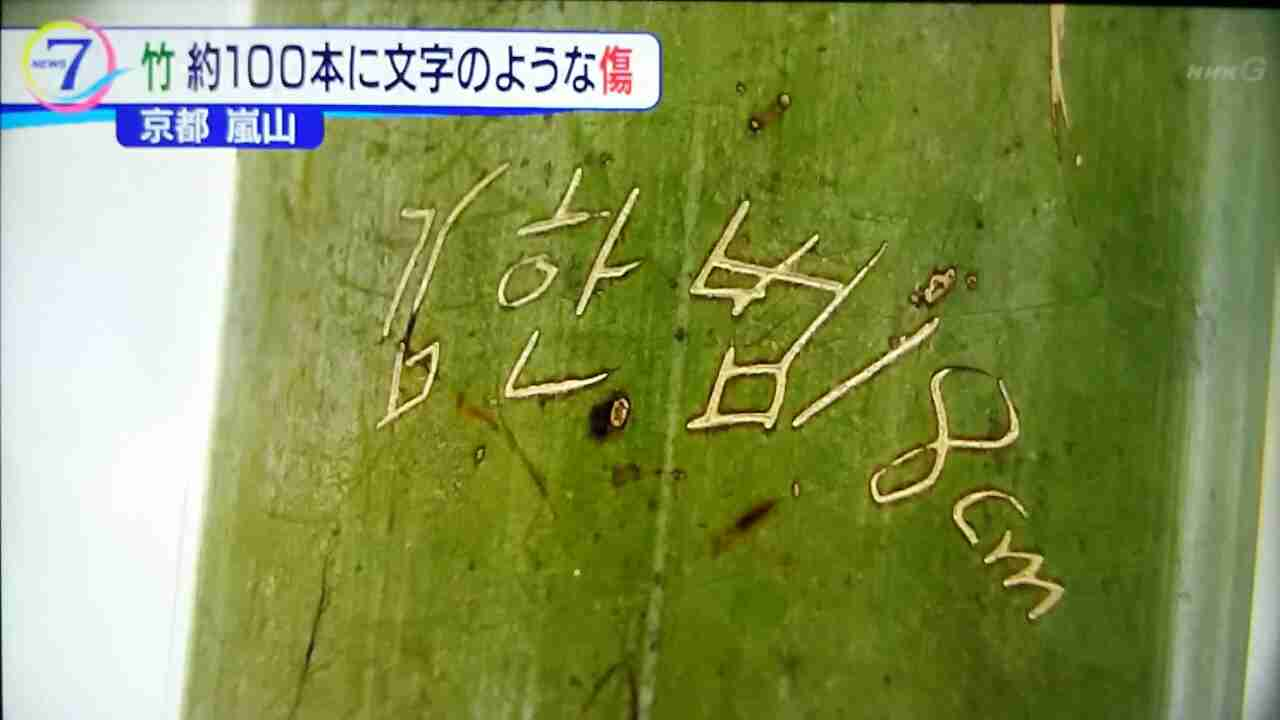 京都・嵐山の竹林 竹を刃物で傷つけ落書き