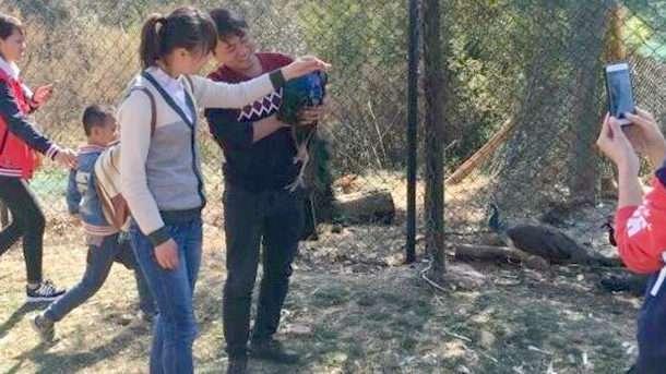 中国の動物園でクジャクの羽が強引に引き抜かれる 過去にも同様の被害