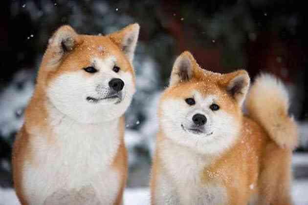 日本犬を愛でる会