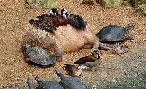 リラックスしている動物\(^o^)/