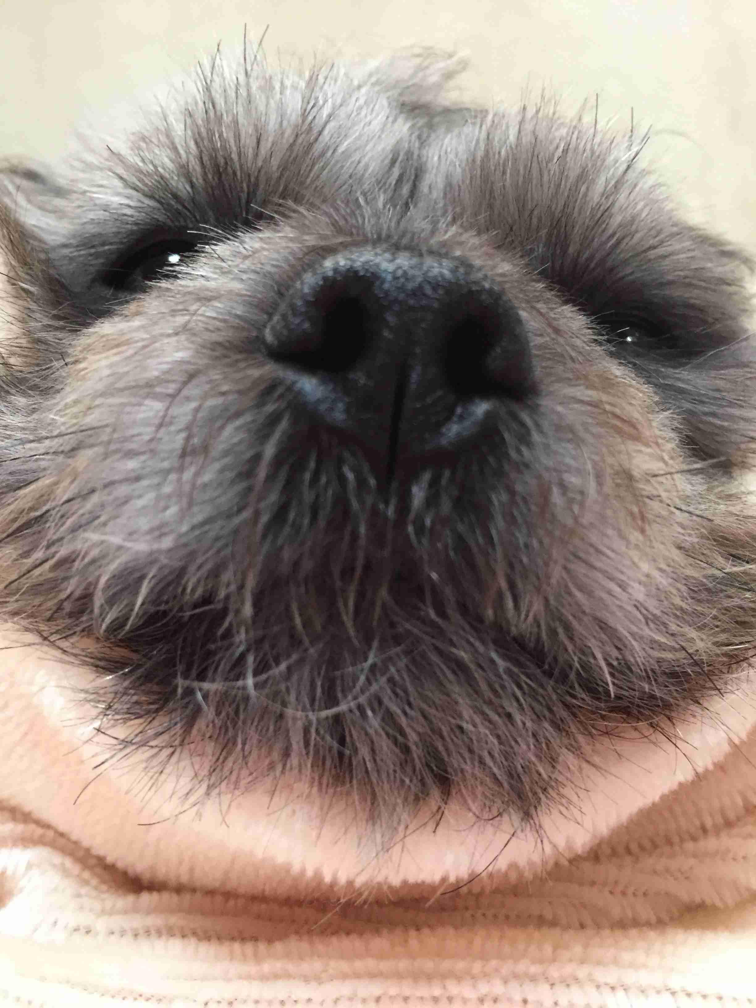 【写メ】ペットを可愛く撮れるコツ教えてください