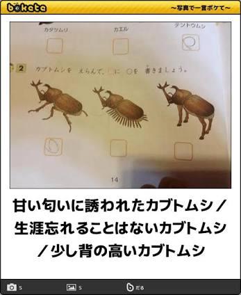 動物、鳥、魚、虫などが曲名に入っている歌♪