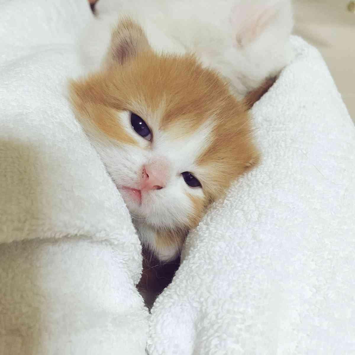 不眠症を克服したい!