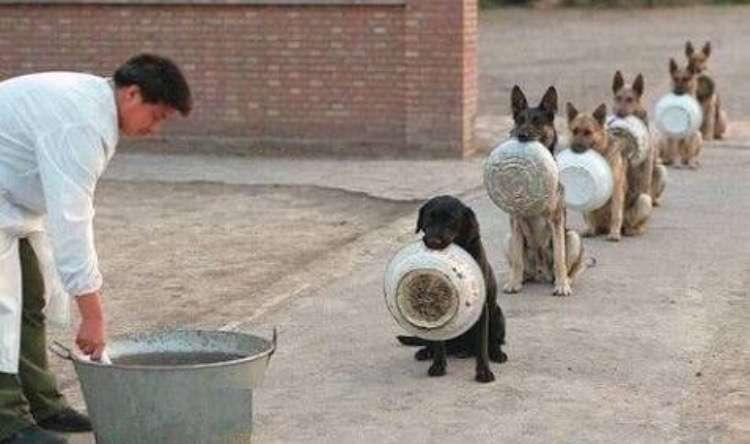 犬のしつけで苦労した人