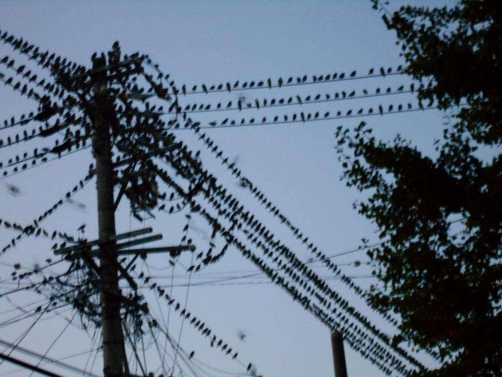 野鳥、わかりますか?