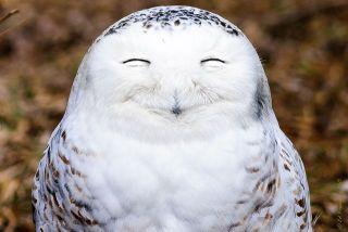 幸せそうな顔を貼るトピ
