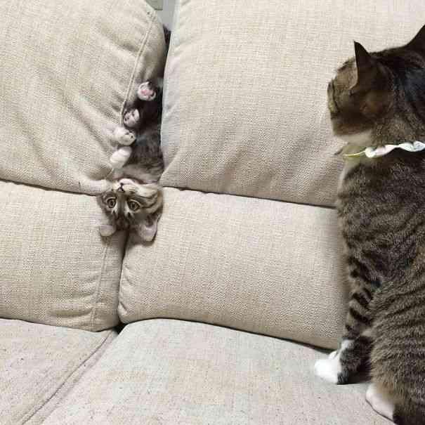 【♡I love cat♡】飼い猫が可愛すぎて、大好きすぎて辛い人