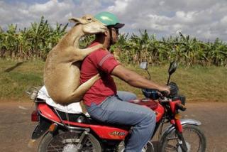 ヒッチハイクしてるみたいな画像を貼るトピ