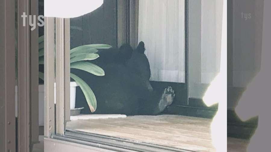 民家にクマが逃げ込む、女性が2階に避難 山口県