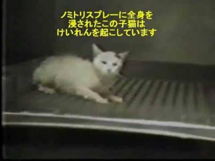 子宮移植でサル妊娠、大学チーム 慶応大「人で実施目指す」