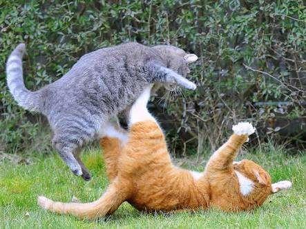 猫が立てそうなトピ