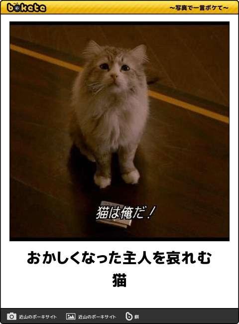 沢尻エリカ、ミニスカで歌って踊るアイドル姿!『猫は抱くもの』エンディング曲MV公開