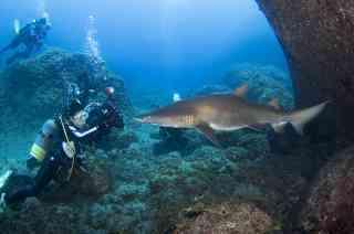 海の生き物写真館