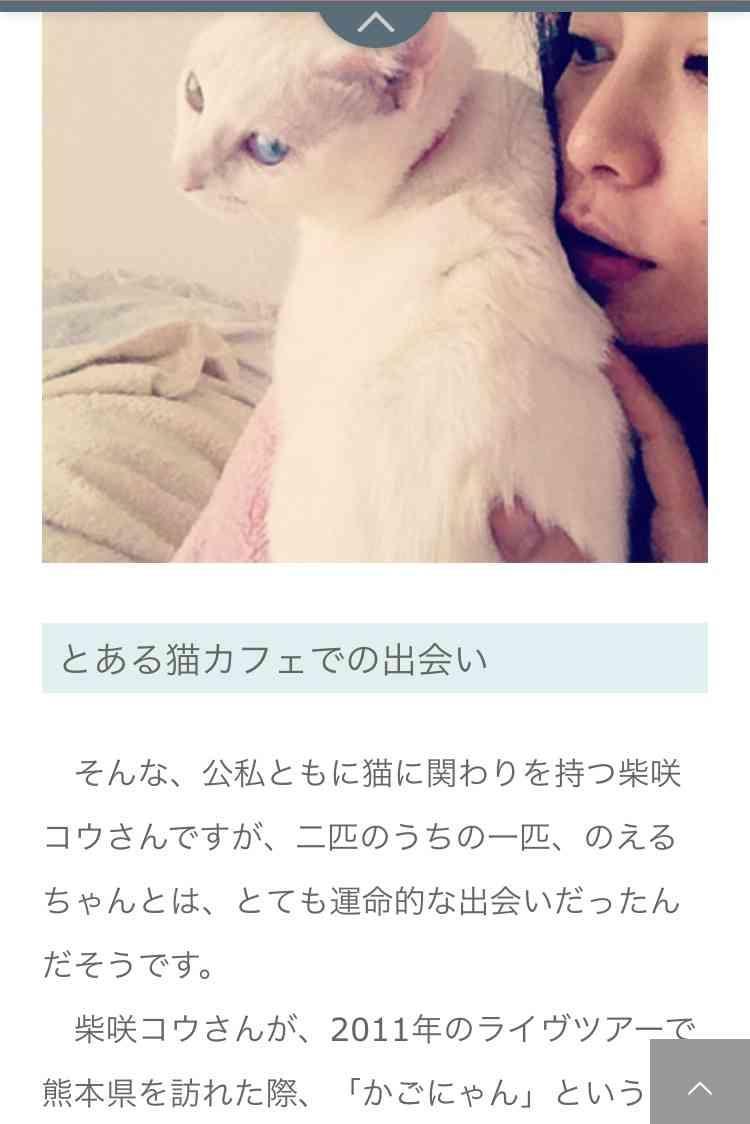 中川翔子、保護ねこカフェで出会った新しい家族を紹介「次元が違う美少女っぷり」