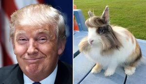 リーゼントでビシッ! キメっキメのウサギさんTwitterで話題に