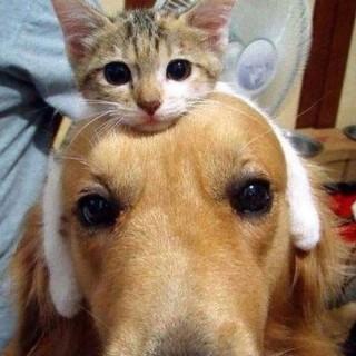 【癒し注意】優しい動物の画像を貼るトピ