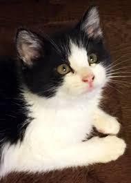 飼ってる猫の柄と一番好きな猫の柄をあげるトピ