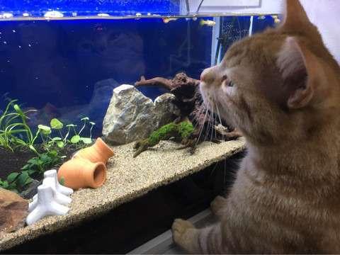 魚の世界にがるちゃんがあったら立ちそうなトピ